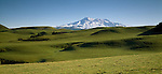 Snow covered Mount Ruapehu with rolling green farmland in foreground. Manawatu, Whanganui. New Zealand.
