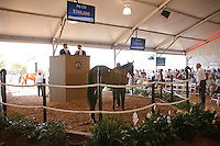 #132Hip #132, a bay colt, sired by Congrats, foaled in Florida and consigned by Secure Investments, during the Fasig-Tipton Florida Sale at the Palm Meadows Training Center in Boynton Beach, Florida on March 26, 2012. The final sale price was $300,000. Arron Haggart/Eclipse Sportswire.