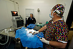 Sea Otter (Enhydra lutris) veterinarians Mike Murray and Marissa Viens performing surgery on rescued otter, Monterey Bay Aquarium, Monterey Bay, California