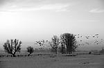 Europa, DEU, Deutschland, Nordrhein Westfalen, NRW, Rheinland, Niederrhein, Xanten, Naturschutzgebiet Xantener Altrhein, Bislicher Insel, Typische Landschaft, Morgenstimmung, Daemmerung, Winter, Schnee, Wildgaense, Nebel, Dunst, Kategorien und Themen, Natur, Umwelt, Landschaft, Jahreszeiten, Stimmungen, Landschaftsfotografie, Landschaften, Landschaftsphoto, Landschaftsphotographie, Naturschutz, Naturschutzgebiete, Landschaftsschutz, Biotop, Biotope, Landschaftsschutzgebiete, Landschaftsschutzgebiet, Oekologie, Oekologisch, Typisch, Landschaftstypisch, Landschaftspflege<br /> <br /> [Fuer die Nutzung gelten die jeweils gueltigen Allgemeinen Liefer-und Geschaeftsbedingungen. Nutzung nur gegen Verwendungsmeldung und Nachweis. Download der AGB unter http://www.image-box.com oder werden auf Anfrage zugesendet. Freigabe ist vorher erforderlich. Jede Nutzung des Fotos ist honorarpflichtig gemaess derzeit gueltiger MFM Liste - Kontakt, Uwe Schmid-Fotografie, Duisburg, Tel. (+49).2065.677997, fotofinder@image-box.com, www.image-box.com]