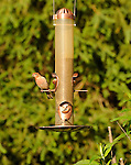 Bird feeder with House finch