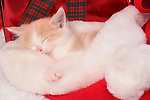 A brown and white kitten sleeping in a Santa Hat surrounded by Christmas Presents