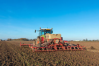 Drilling winter wheat after sugar beet harvest - Lincolnshire, January