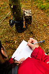 Scottish Wildcat (Felis silvestris grampia) biologist, Kerry Kilshaw, writing data for camera trap in coniferous forest, Scotland, United Kingdom