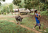 PHILIPPINES, Palawan, Barangay region, a Batak man named Gadong Sa'avedra walks with his niece Liralyn while leading a cow in Kalakwasan Village