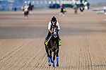LOUISVILLE, KENTUCKY - MAY 01: Roadster, trained by Bob Baffert, exercises in preparation for the Kentucky Derby at Churchill Downs in Louisville, Kentucky on May 1, 2019. John Voorhees/Eclipse Sportswire/CSM
