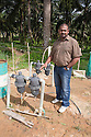 A plantation worker standing by control valves for the plant nursery irrigation system. Water is drawn from a rainwater harvesting pond. The Sindora Palm Oil Plantation, owned by Kulim, is green certified by the Roundtable on Sustainable Palm Oil (RSPO) for its environmental, economic, and socially sustainable practices. Johor Bahru, Malaysia