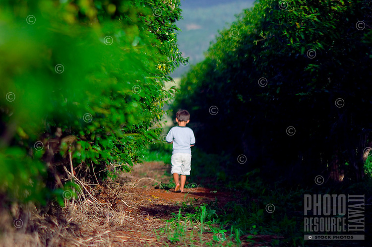 Young Boy walking Amongst Groves Of Coffee Trees