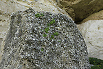 Israel, Shephelah, fossil conglomerate in Tel Zafit, remnants of the sea that covered the area