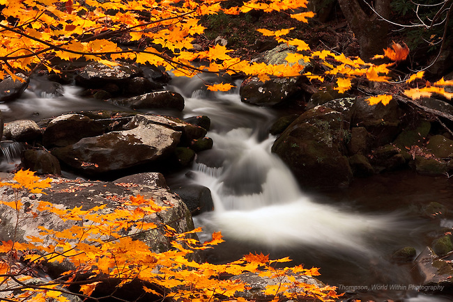 An often-photographed scene at the end of the Tremont Road on the Middle Prong of the Little Rover.  I help lead a Smoky Mountain Photo Workshop each Fall, and take images during the scouting days before the workshop starts.