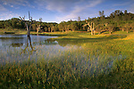 Seasonal pond in spring, Isabel Valley, Santa Clara County, California