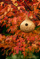 Natural gourd hollowed out for birdhouse hanging in garden in fall colored tree