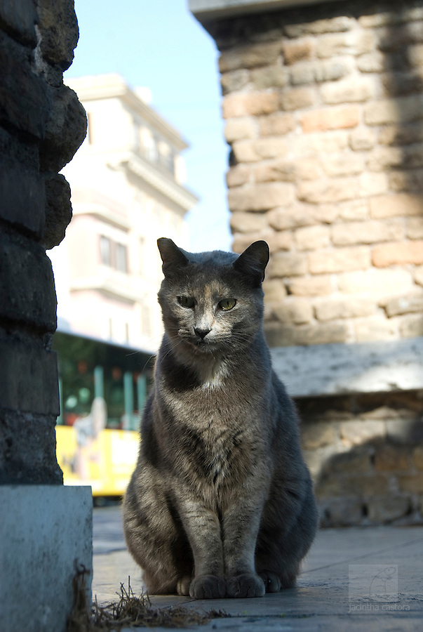 one of the cats of the cat forum in rome italy