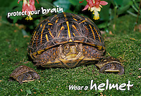 Protect your brain, wear a helmet