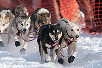 Dallas Seavey's lead dogs at the Restart of the 2009 Iditarod in Willow Alaska