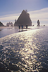 Olympic National Park, Shi Shi Beach, Point of the Arches, Washington State, Pacific Northwest, hikers on the beach, sea stacks, Pacific Ocean, Northwest coast, Olympic Peninsula, North America, USA,.