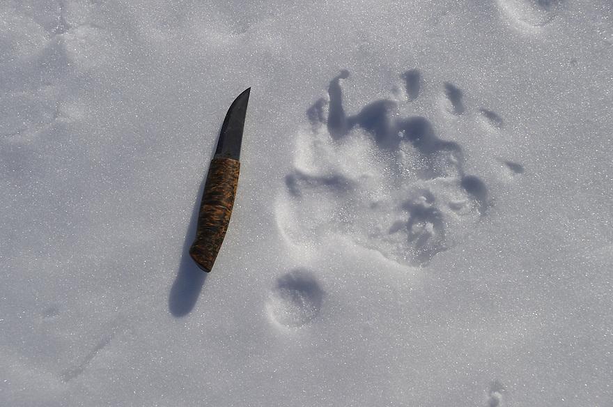 Bear footprint in snow