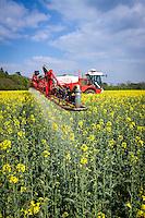 Spraying oil seed rape in flower