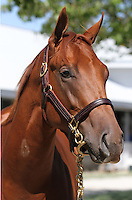 Hip #Elusive Quality - Xtra Heat colt at the  Keeneland September Yearling Sale.  September 9, 2012.