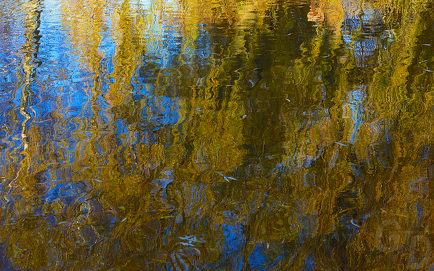 A Willow tree reflecting in a pond, Koenigslutter Germany
