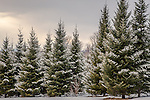 Winter scene in Bridgton, Maine, USA