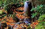 Autumn leaves in the University of Washington Japanese Garden in the Arboretum with waterfall Seattle Washington State USA