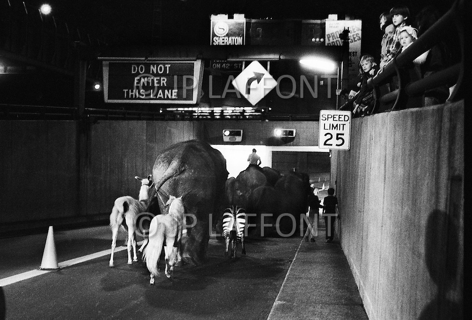 May 18th 1971. New York City. Because of transport strike, Ringling Bros. circus walks their elephants through the Holland Tunnel into New York City. They march them across 34th St. and into Madison Square Garden.
