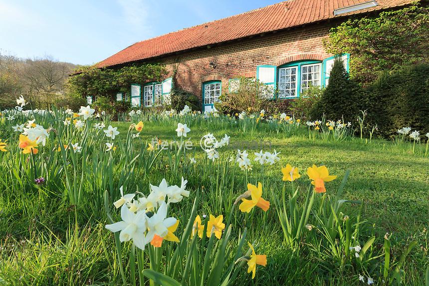 Jardin de la Ferme du Mont des R&eacute;collets: prairie plant&eacute;es de plantes bulbeuses avec<br /> narcisses blanc 'Mount Hood'<br /> narcisses cyclamineus 'Jack Snipe'(blanc &agrave; coeur jaune, plus petit), narcisses triandus'Thalia'(blanc tardif),<br /> frillaires Uva-vulpis // France, garden of Ferme du Mont des R&eacute;collets, prairie with bulbous plants including narcissus
