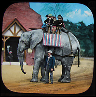 Early colourised pictures of London Zoo.