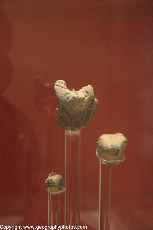 Carved stone animal faces display of neolithic finds, National Museum of Archaeology, Valletta, Malta
