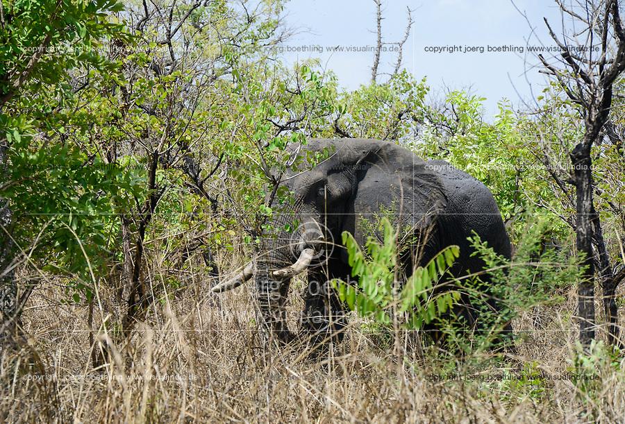 UGANDA, Karuma Game reserve, Elephant / Karuma nationalpark, Elefant
