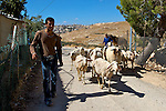 A Palestinian labourer walks alongside the goats of a shepherd in the Palestinian village of Khallet an Nu'man near Jerusalem & Bethlehem on 24/06/2010. The village traditionally acted as a conduit for local shepherds moving flocks between grazing lands & more recently for Palestinian labourers from across the West Bank working on the construction of the nearby Israeli settlement of Har Homa. While part of the West Bank, the village of Khallet an Nu'man has been cut off from the nearby Palestinian village of Al Khas & the city of Bethlehem by Israel's controversial separation barrier.