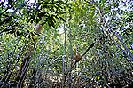 Vegetaçao da Floresta Amazônica no Rio Negro. Foto de Juca Martins.
