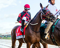 LOUISVILLE, KY - MAY 06:Looking at Lee in post parade of the 143rd Kentucky Derby on Kentucky Derby Day at Churchill Downs on May 6, 2017 in Louisville, Kentucky. (Photo by Sue Kawczynski/Eclipse Sportswire/Getty Images)