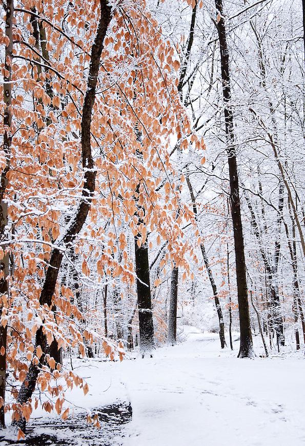 Winter in New City New York.