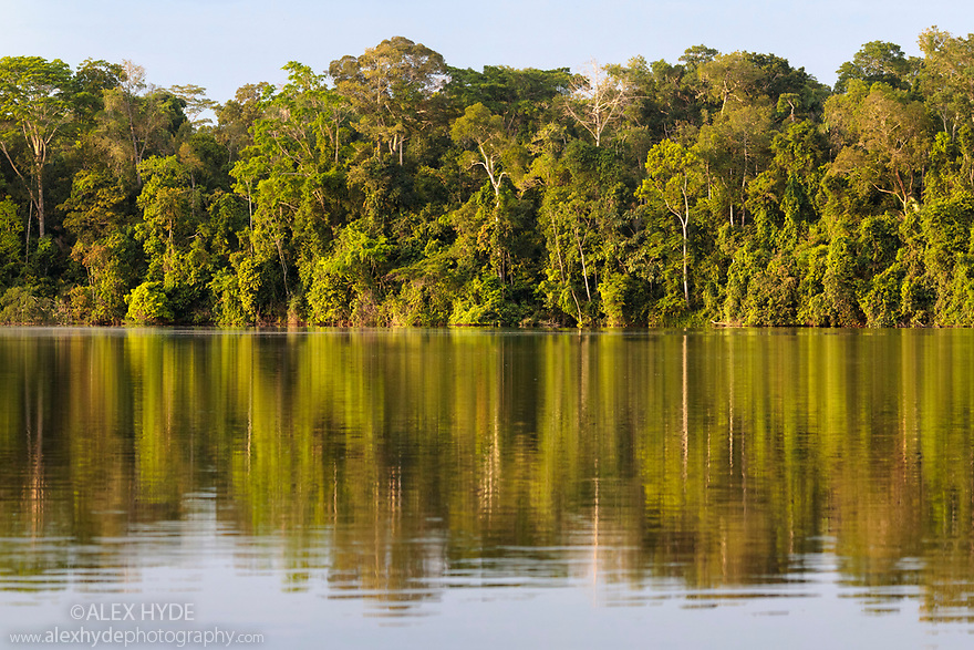 Lowland rainforest along the banks of Salvador Oxbow Lake, Manu Biosphere Reserve, Amazonia, Peru.