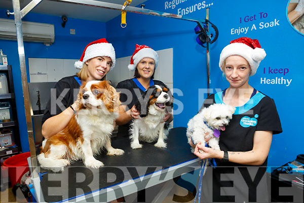 Petmania Groomers l-r Elaine Deasy with max, Alice Matusova with Cody and Karen Sheehan with Sadie