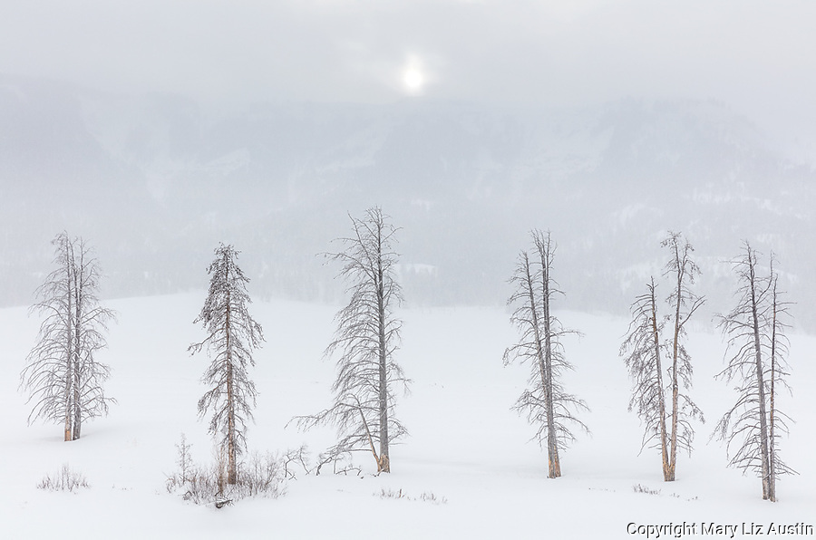Yellowstone National Park, Wyoming: Sun shining through storm clouds with snowy tree line in the Lamar Valley