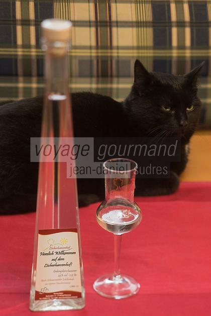 Europe/Allemagne/Bade-Würrtemberg/Forêt Noire/Bad Peterstal-Griesbach: Distillerie: Löcherhansenhof, Chat et verre de Schnaps