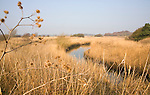Reedbeds and floodplain of River Alde at Snape, Suffolk, England