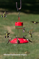 01162-12820 Ruby-throated Hummingbirds (Archilochus colubris) at Dr. JB's Hummingbird Feeder, Marion County, IL