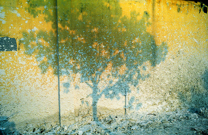 A tree casts its shadows onto a wall splattered with plaster in Shanghai, China in April 2008...