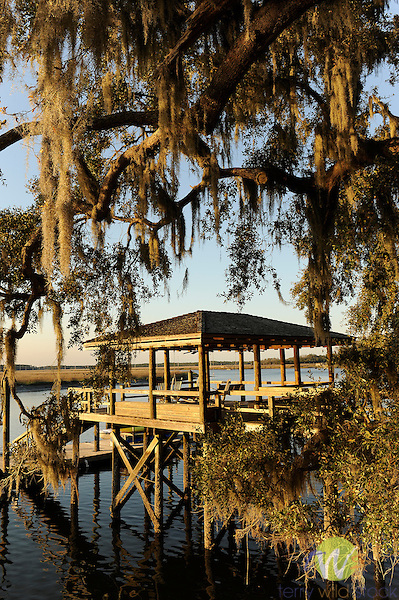 Spring Island, SC. Walker Landing community dock and live oak on Chechessee Creek.