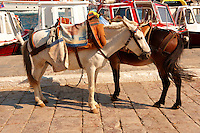 Pack Ponies waiting to be loaded with goods on Hydra,  Greek Saronic Islands.