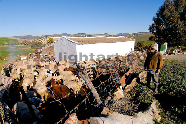 Andalucia, Andalusia, Cadiz, Europe, Spain, Juan Arias, Calle Barrera 61, Farm near Zahara de la Sierra, Andalusien, Europa, Spanien, Zahara, Koppel, Koppeln, Kuhweide, Kulturlandschaft, Kulturlandschaften, Landschaftsform, Landschaftsformen, Weiden, Weide, landscape, landscape form, landscape forms, landscapes, manmade landscape, pasture, pastures, pasture land, Architektur, Bauernhaus, Bauernhäuser, Bauernhof, Bauernhöfe, Bauernkate, Bauernkaten, bauten, Bauwerke, Farm, Farmhaus, Gebäude, Gehöft, Gehöfte, Haeuser, Architecture, building, buildings, farmhouse, farmhouses, farms, homestead, Bauer, Bäuerin, Bauern, Beruf, Berufe, Farmer, Job, Jobs, Landwirt, Landwirte, Lebewesen, Leute, Mensch, Menschen, Person, Personen, farmers, folks, human, human being, human beings, humans, living being, people, persons, profession, professions, elderly man, elderly men, old man, old men, pensioner, pensioners, senior, senior citizen, senior citizens, Alte Maenner, alte Menschen, alter, Alter Mann, Aeltere Maenner, Aelterer Mann, Maenner, Pensionaer, Pensionaere, Rentner, Senioren, animalia, Fauna, Hammel, Mammalia, Ovis aries, Paarhufer, Säuger, Säugetier, Säugetiere, Schaf, Schafe, Schafherde, Schafherden, Tierbild, Tierbilder, Vertebrata, Warmblüter, Wirbeltier, Wirbeltiere, animal, animals, cloven-hooved animal, flock, flocks, mammal, mammals, sheeps, vertebrate, vertebrates, warm blooded animals, warm blooded-animal, Haustier, Haustiere, Domestic Animals, Sheep