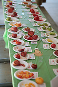 The dwarf variety table, with 52 distinct varieties during 9th annual Tomatopalooza at Apex Community Park, Saturday, July 23, 2011. ..