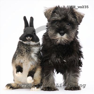 Xavier, ANIMALS, fondless, photos, SPCHWS235,#A# Tiere ohne Fond, animales sind fondo