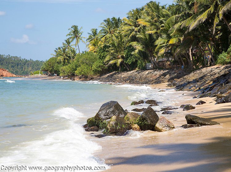Tropical landscape of palm trees and sandy beach, Mirissa, Sri Lanka, Asia