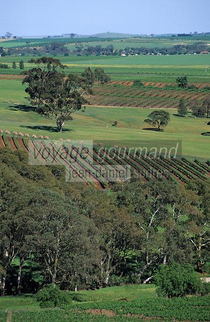 Océanie/Australie/South Australia/Australie Méridionale/Barossa Valley: Le vignoble