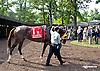 Belle Gallantey before The Delaware Handicap (gr 1) at Delaware Park on 7/12/14